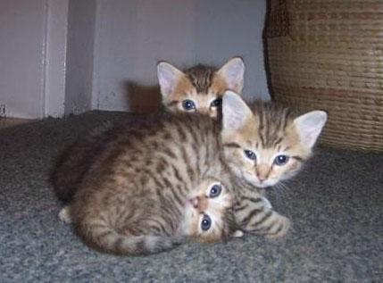 2 or 3 kitten