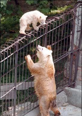 bear on the top