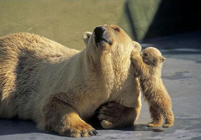 bears64