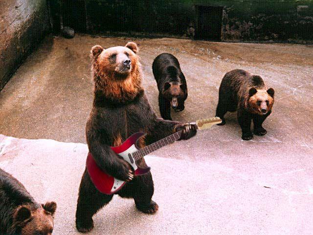 bears band