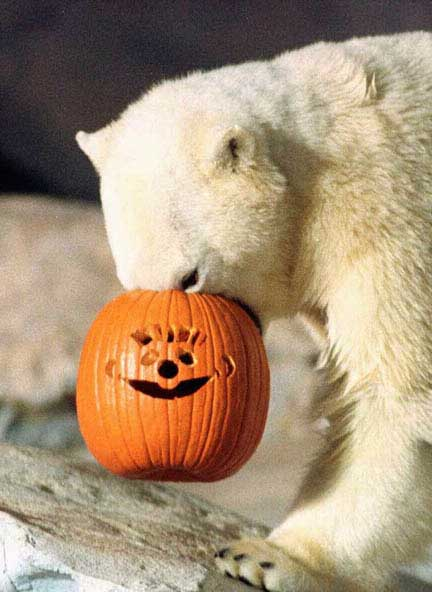 bears hellowin