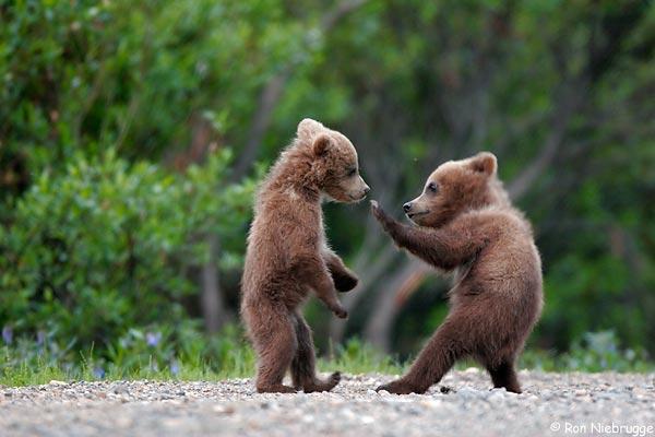 bears kung fu