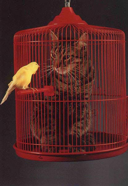 bird and cat inside