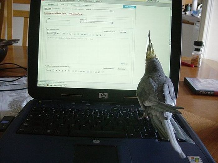 bird on hp