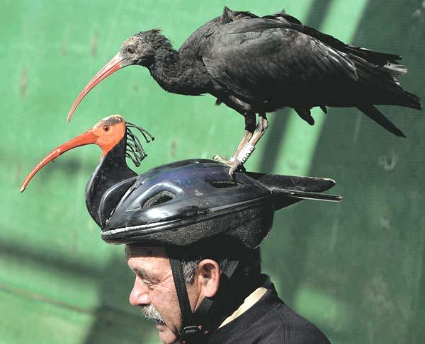 bird passenger