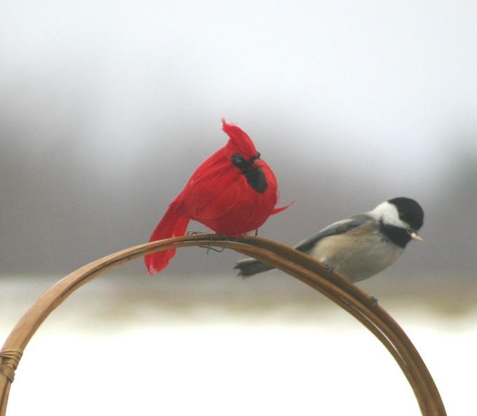 birds sss