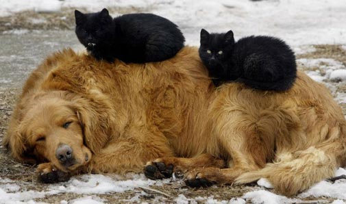 black cats on dog