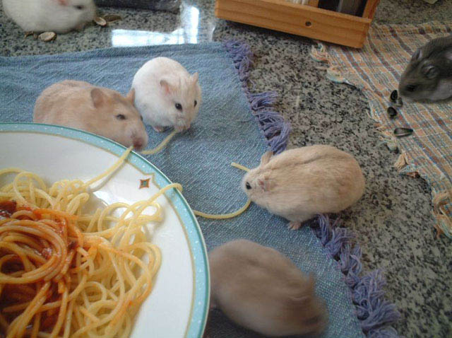 breakfast for mouses