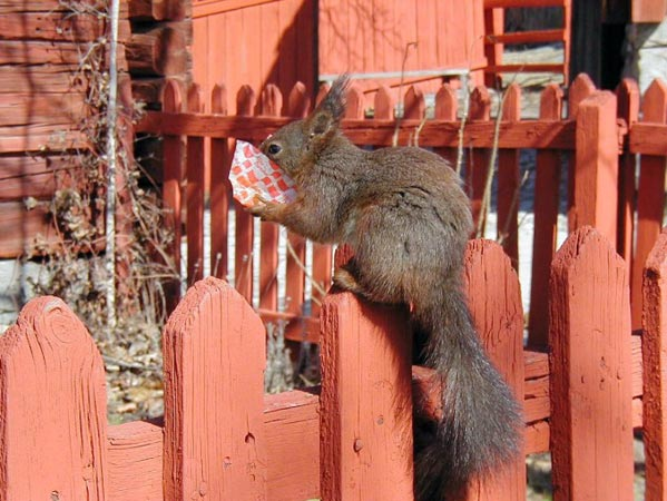 breakfast for squirrel