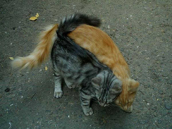 cat2  2