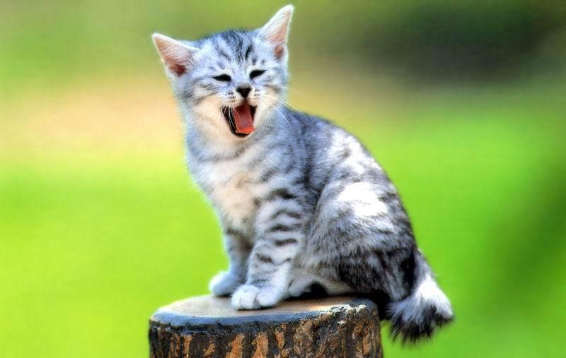 cat aaaaaaa