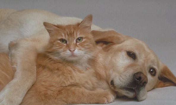 cat and dog 77