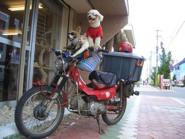 cat and dogs bikers