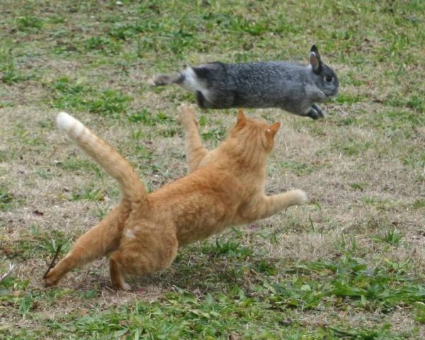 cat and flying rabbit