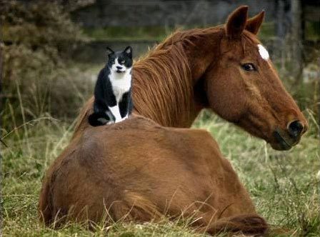 cat and horse 99