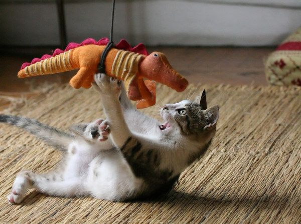 cat fighting dragon
