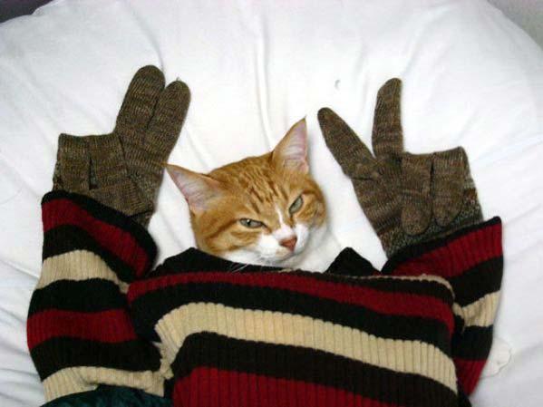cat fingers