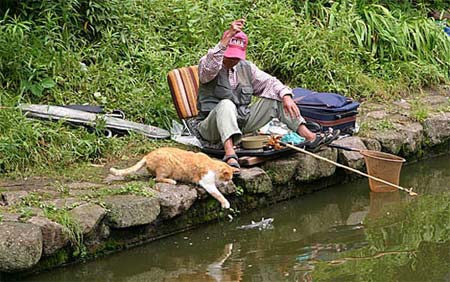 cat fisherman