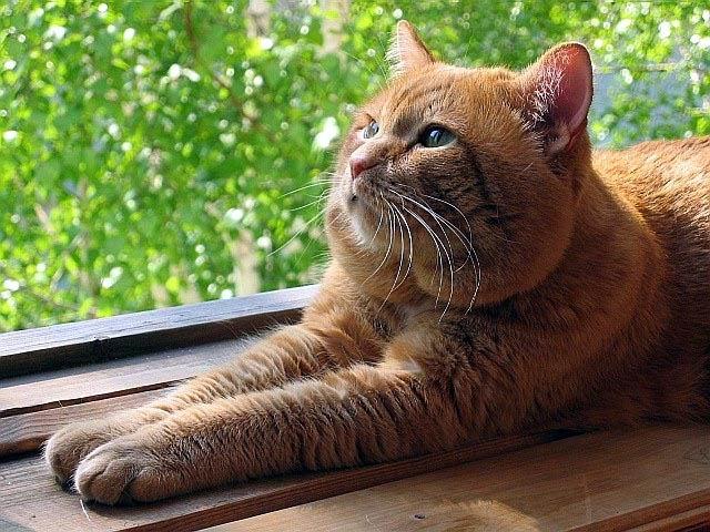 cat furr