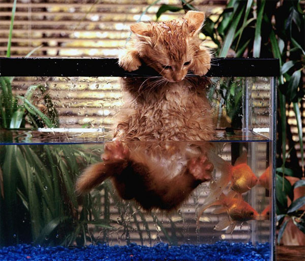 cat in aquarium 2