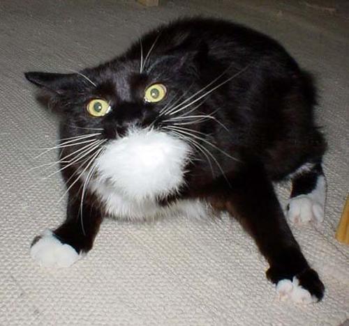 cat in horror