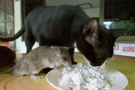 cat mouse breakfast