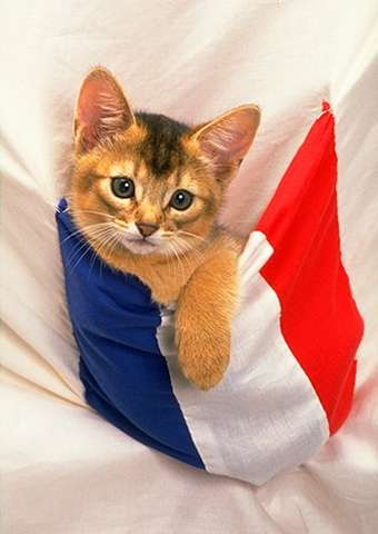 cat patriot