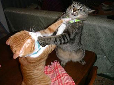 cats_fighting.jpg