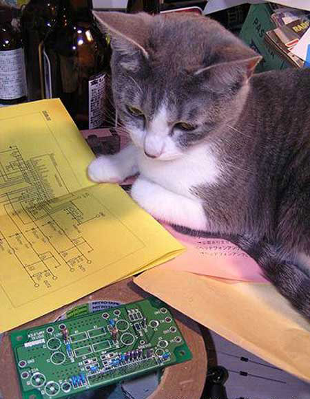 cats schema