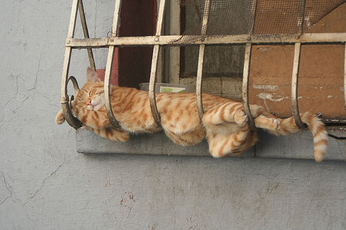 cats sleeping place