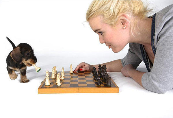 chess dog