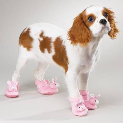 dog and pink shoes