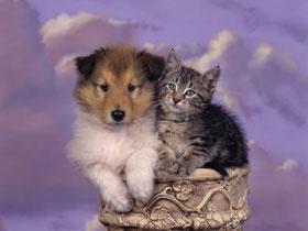 dog and cat e83209