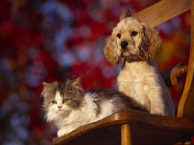 dog and cat ferfre