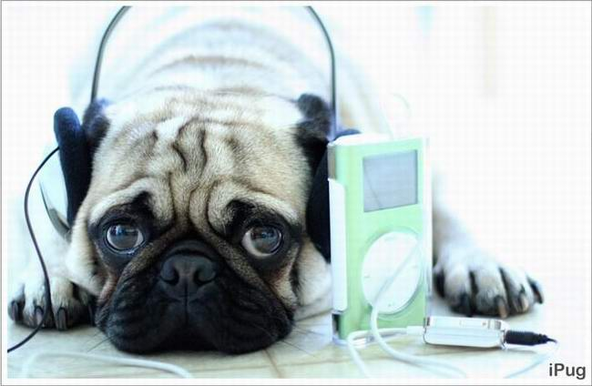 dog and ipod