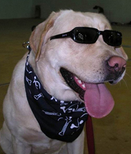 dog black glasses