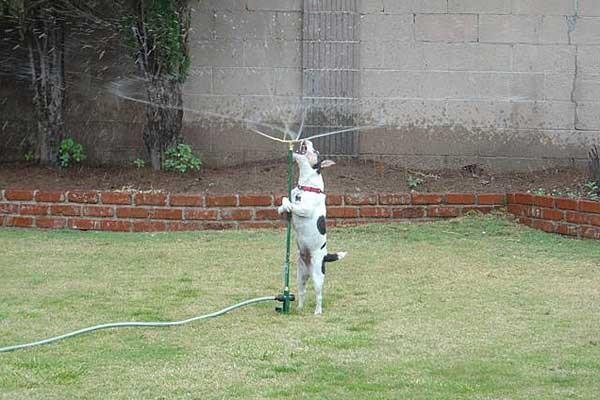 собаки: Пить! Пить!