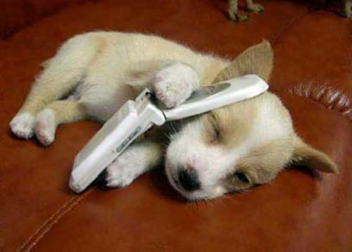 dog mobile phone