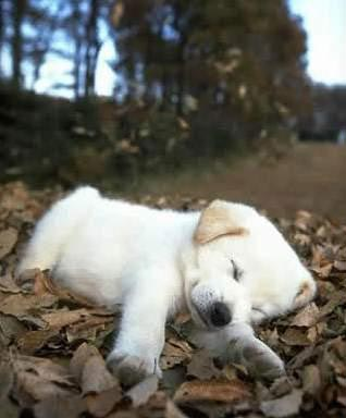 dog sleep on road