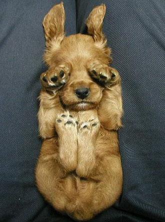 dog sleepy