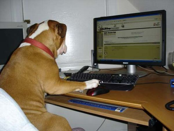 dog watching monitor 2