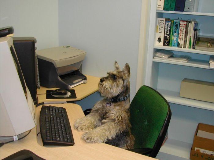 собаки: Пес секретарь