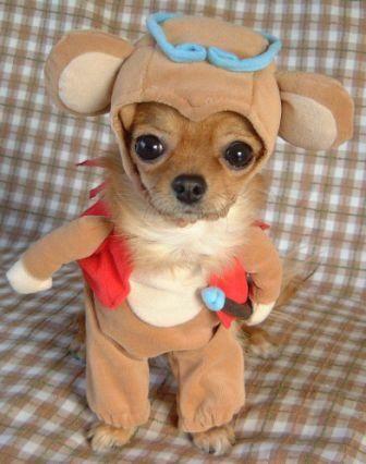dogs wear