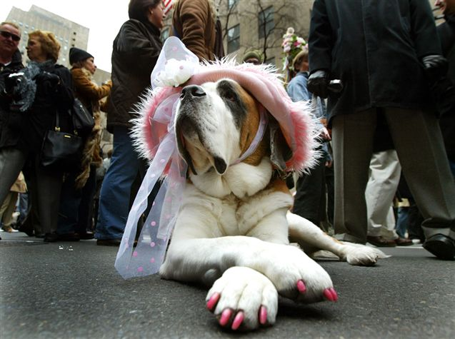 glamour dog