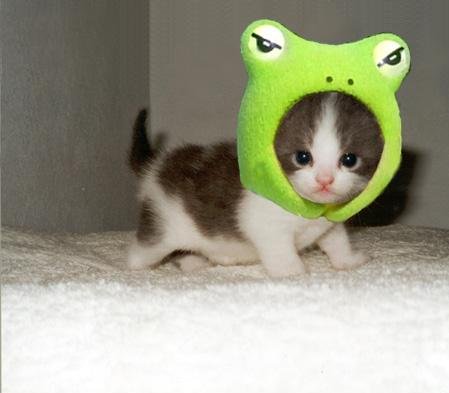 green kitty
