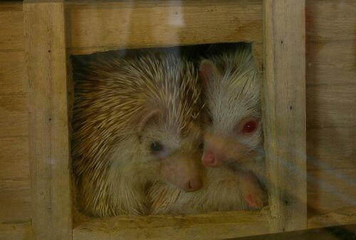 hedgehogs home