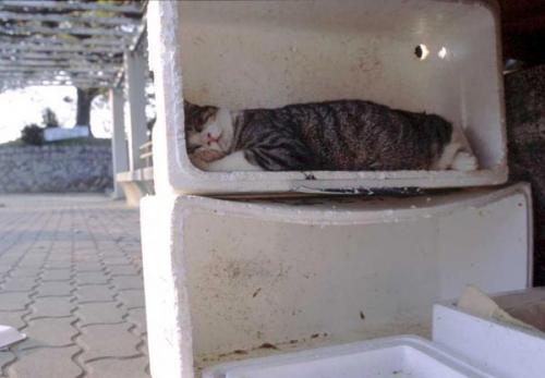 its place to sleep