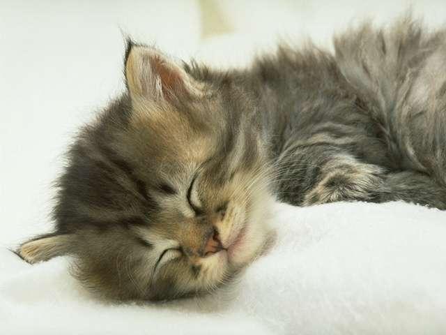 kitten101