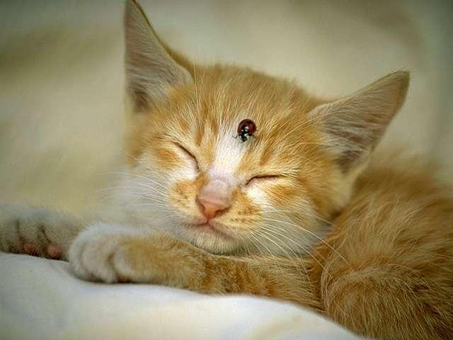 kitten106