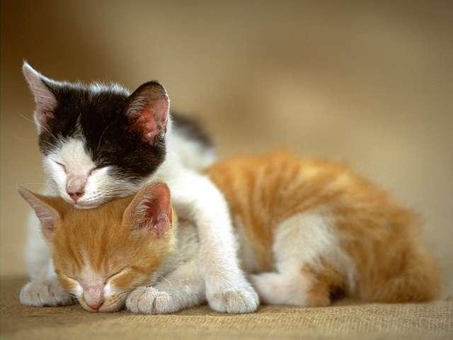 kitten122